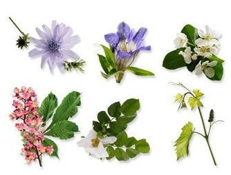les produits naturels bio sont fabriqués avec des plantes ou des fleurs