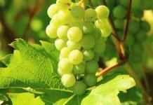 Le marché du vin français en danger aux USA